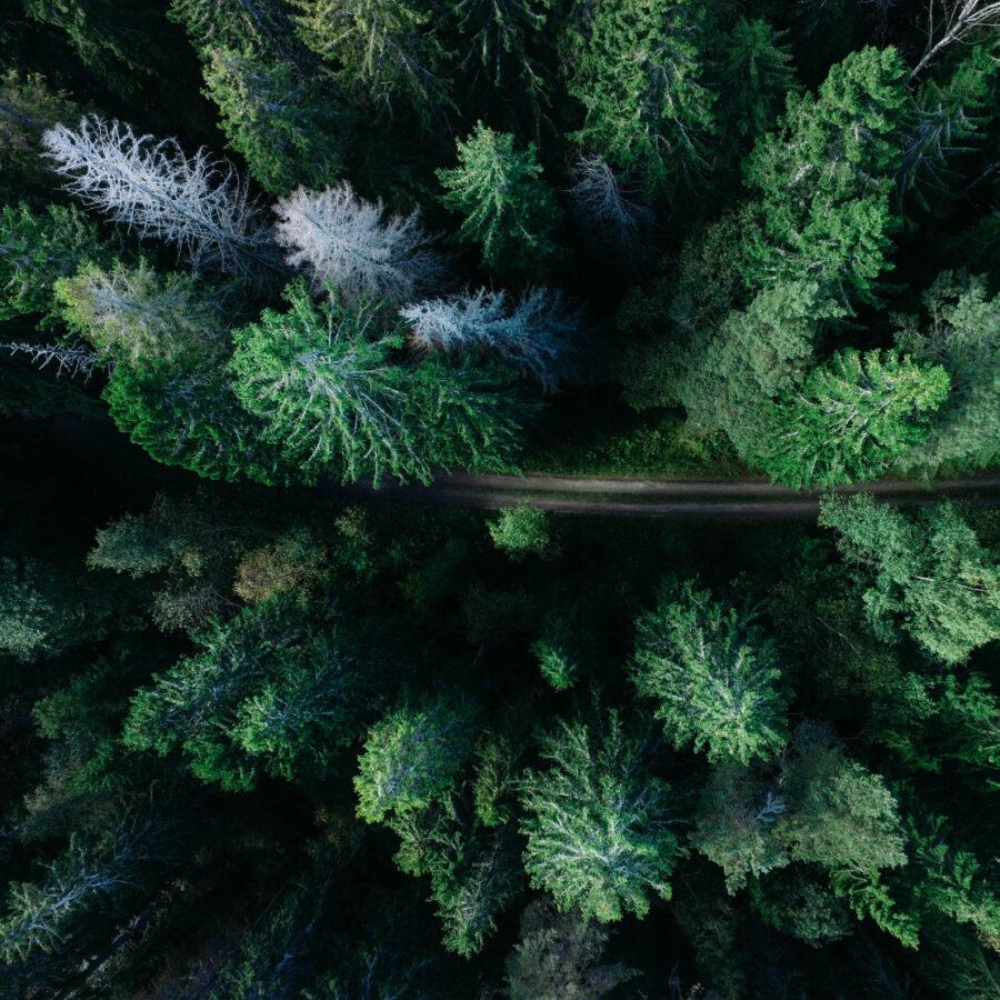 Vista aérea bosque